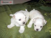 Sbazar.sk - inzeráty Zvieratá 407d843d705
