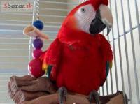 Nabídka Zlaté A Modré Papoušek Pro Prodej