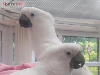 2 Deštník kakadu papoušku s dokumentem