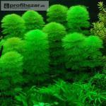 Rostliny pro akvaristy