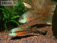 Akvarijné rybičky až do domu