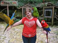 Detské papagáje a papagáj vajcia na predaj