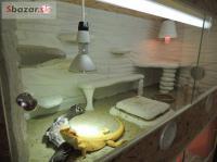 Luxusní nové terárium 120x50x50cm pro hada, aga