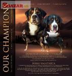 Velký švýcarský salašnický pes-štěně FCI
