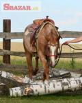 Více koní na prodej