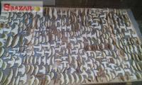 Prodej sušených hřibů