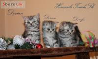 Britské mramorované mačiatka Whiskas s PP 13c3bc36fc9